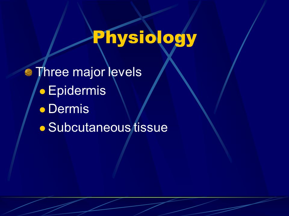 Physiology Three major levels Epidermis Dermis Subcutaneous tissue