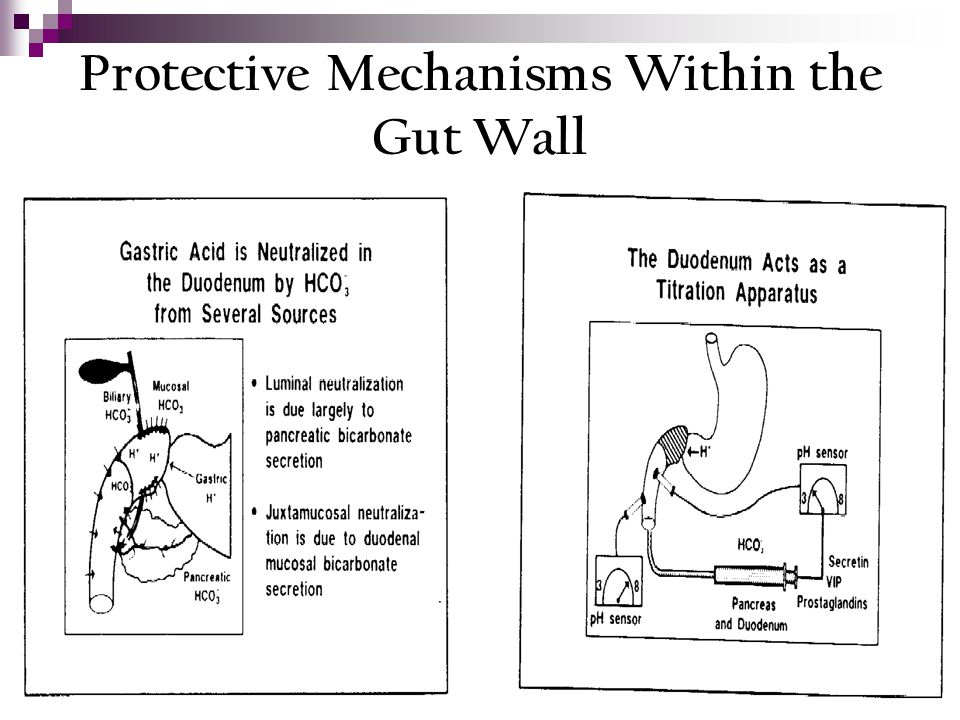 Protective Mechanisms Within the Gut Wall