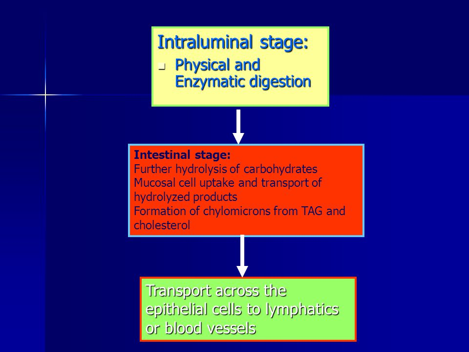 Intraluminal stage: Physical and Enzymatic digestion