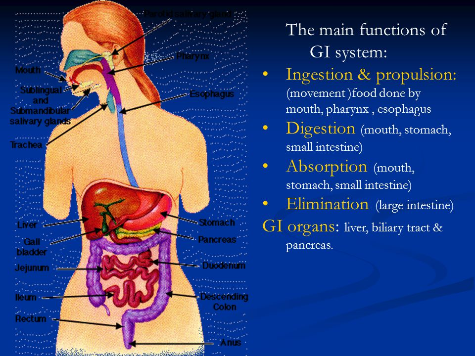 The main functions of GI system: