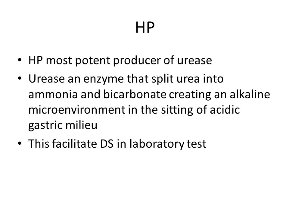 HP HP most potent producer of urease