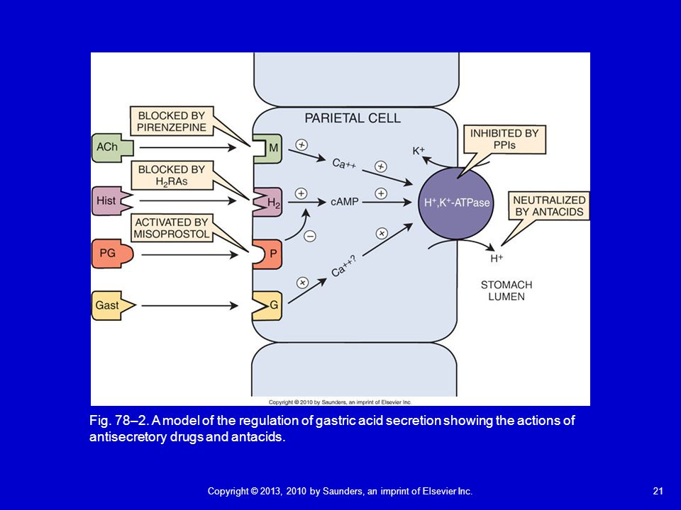 Fig. 78–2. A model of the regulation of gastric acid secretion showing the actions of antisecretory drugs and antacids.