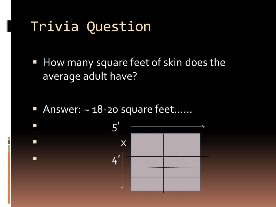 Trivia Question How many square feet of skin does the average adult have Answer: ~ 18-20 square feet……
