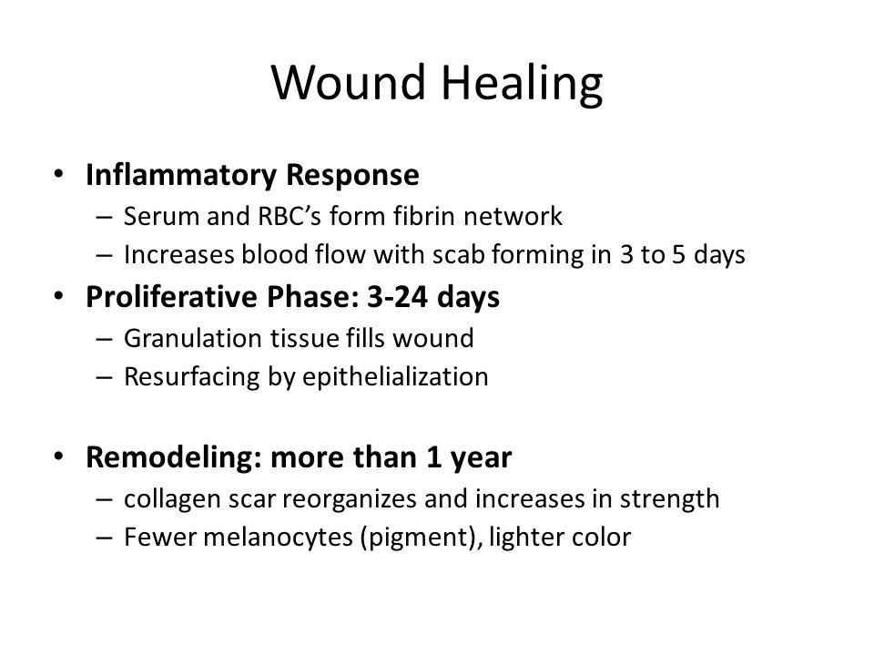 Wound Healing Inflammatory Response Proliferative Phase: 3-24 days