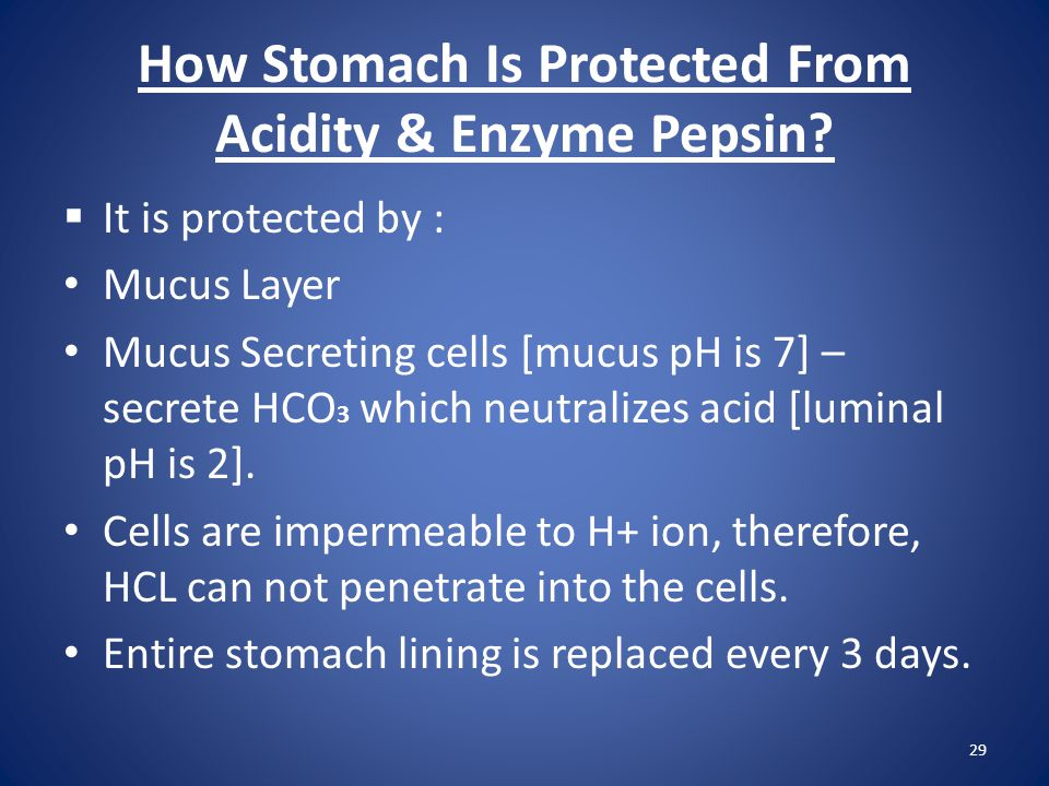 How Stomach Is Protected From Acidity & Enzyme Pepsin