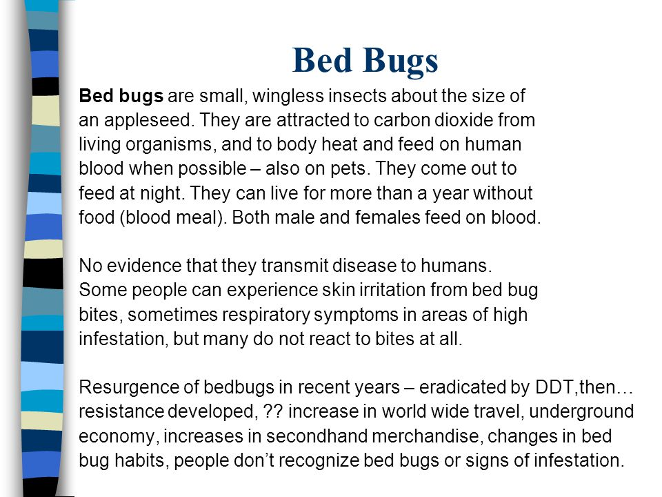 Bed Bugs Bed bugs are small, wingless insects about the size of