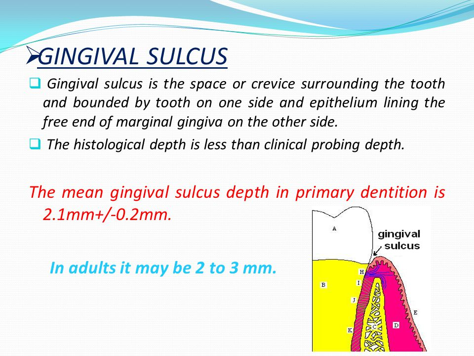 GINGIVAL SULCUS