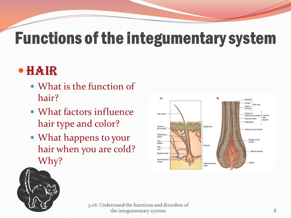 Functions of the integumentary system