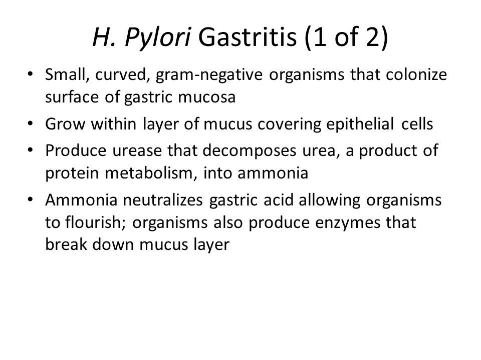 H. Pylori Gastritis (1 of 2)
