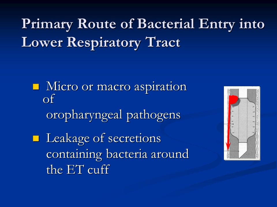 Primary Route of Bacterial Entry into Lower Respiratory Tract
