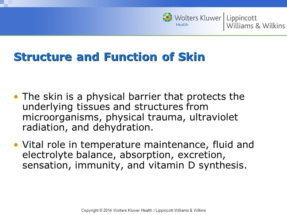 Structure and Function of Skin