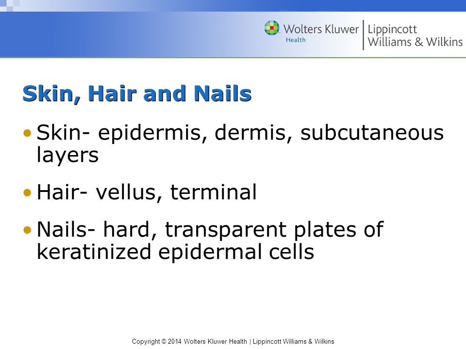 Skin, Hair and Nails Skin- epidermis, dermis, subcutaneous layers. Hair- vellus, terminal.