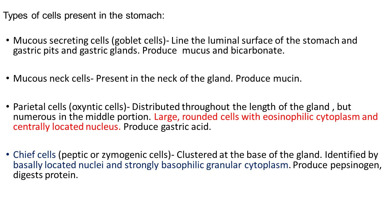 Types of cells present in the stomach: