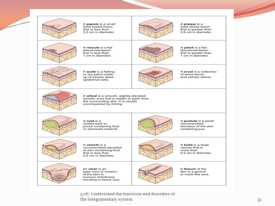 3.06: Understand the functions and disorders of the integumentary system