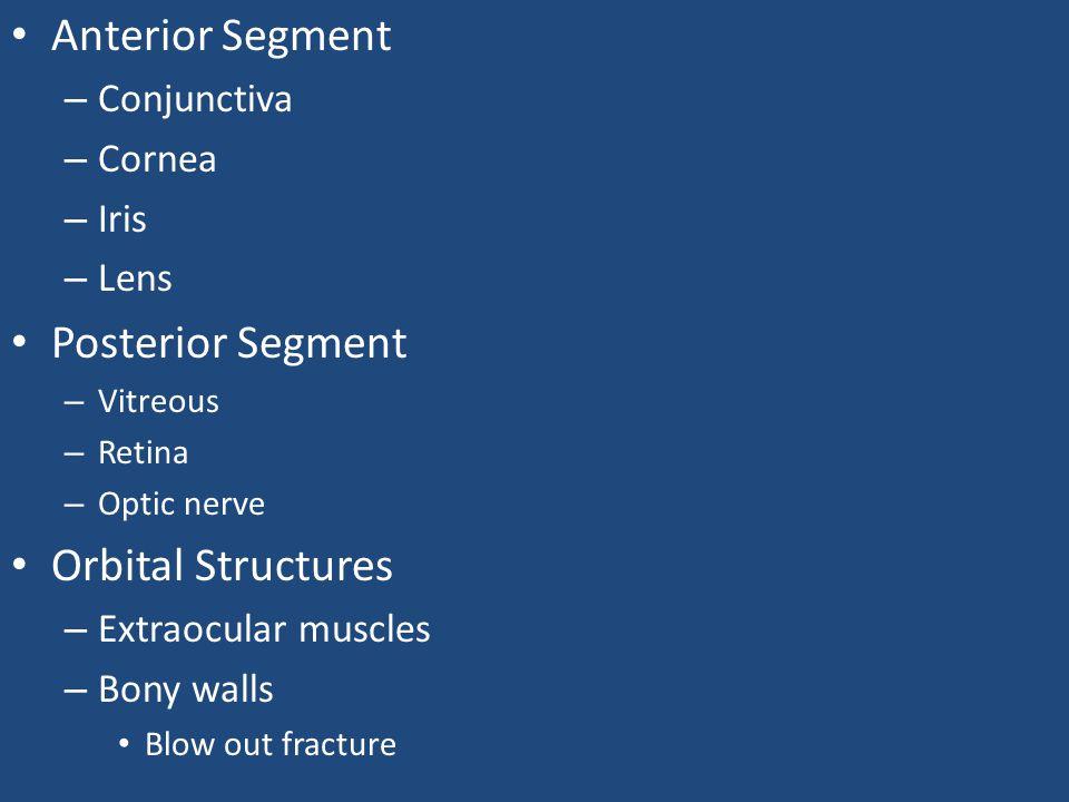 Anterior Segment Posterior Segment Orbital Structures Conjunctiva