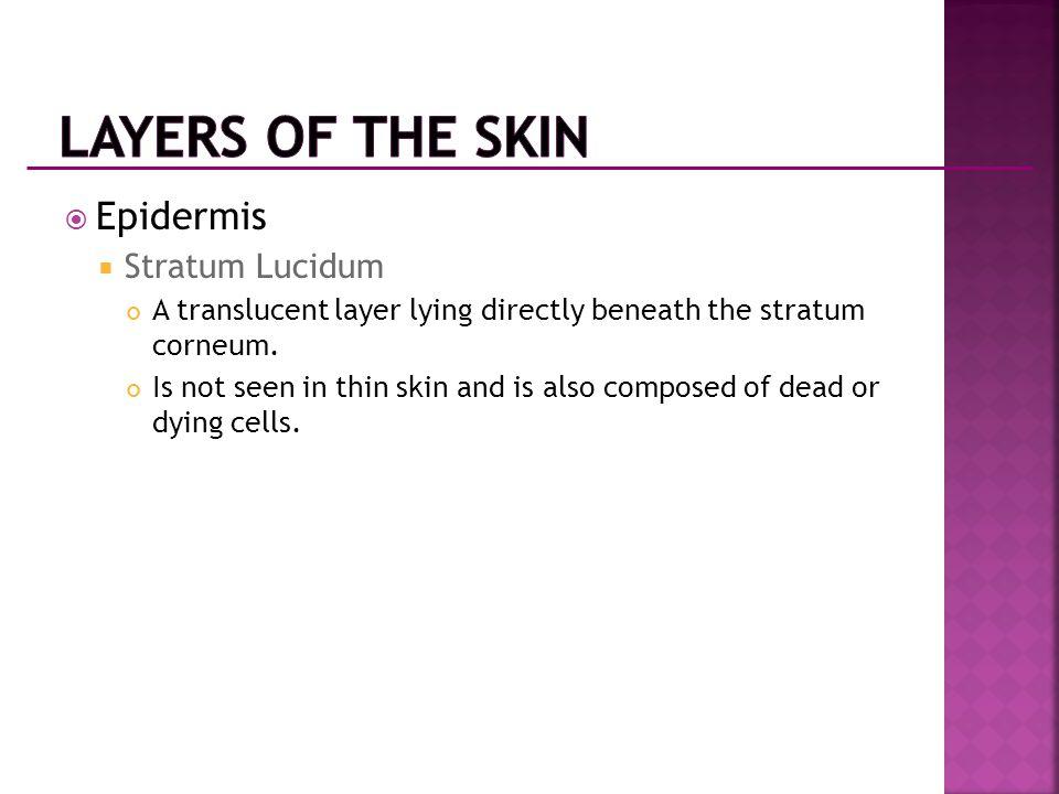 Layers of the Skin Epidermis Stratum Lucidum
