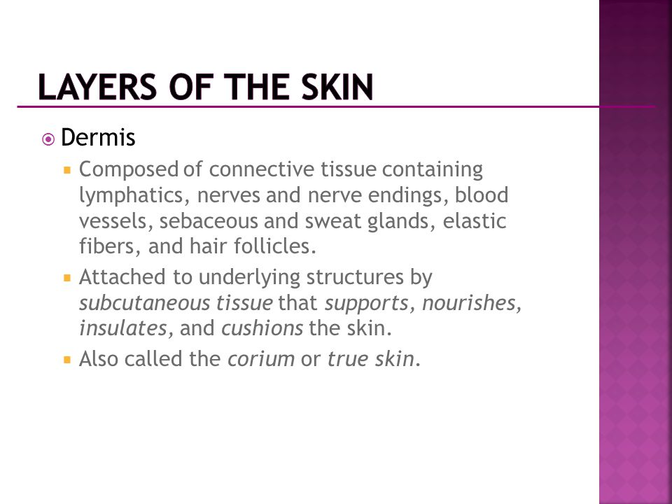 Layers of the Skin Dermis