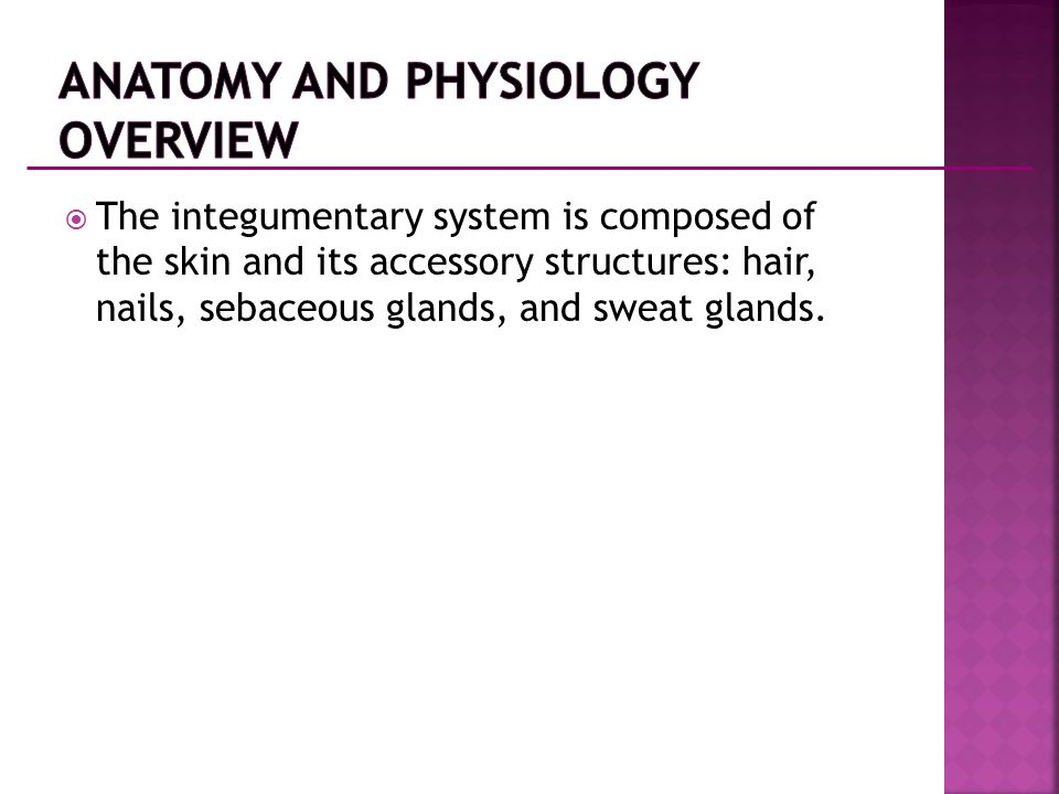 Anatomy and Physiology Overview