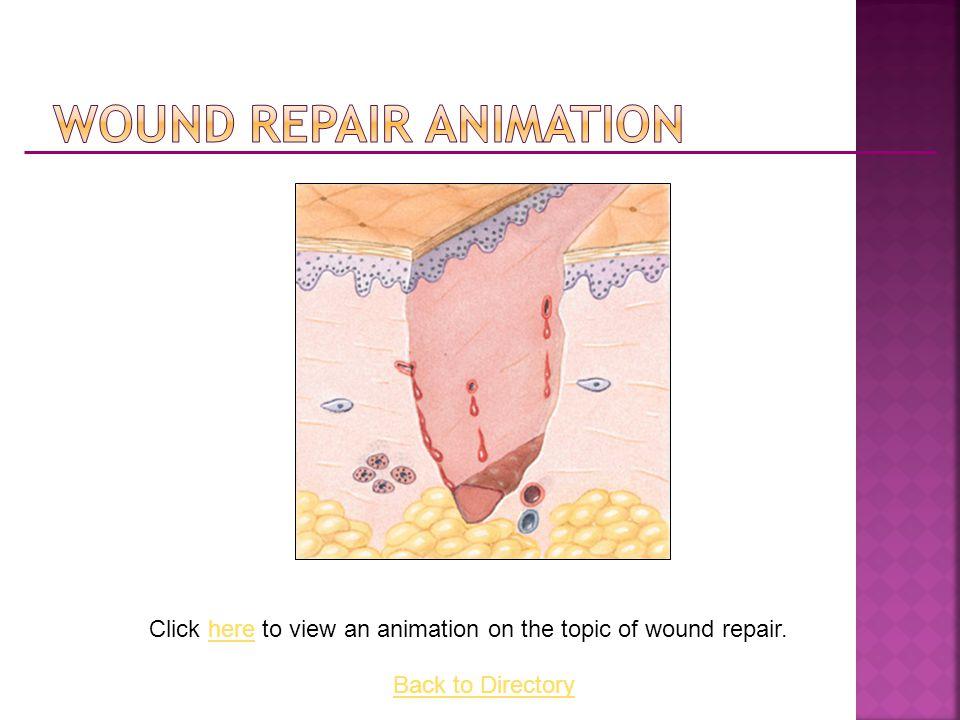 Wound Repair Animation