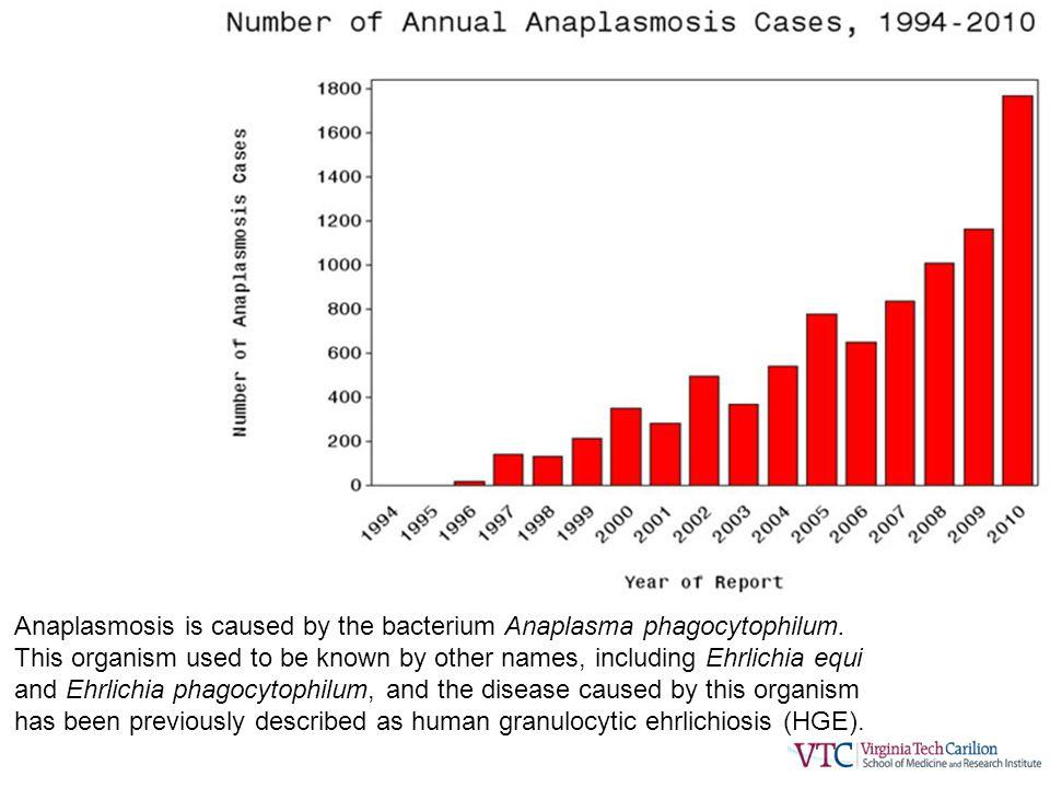 Anaplasmosis is caused by the bacterium Anaplasma phagocytophilum