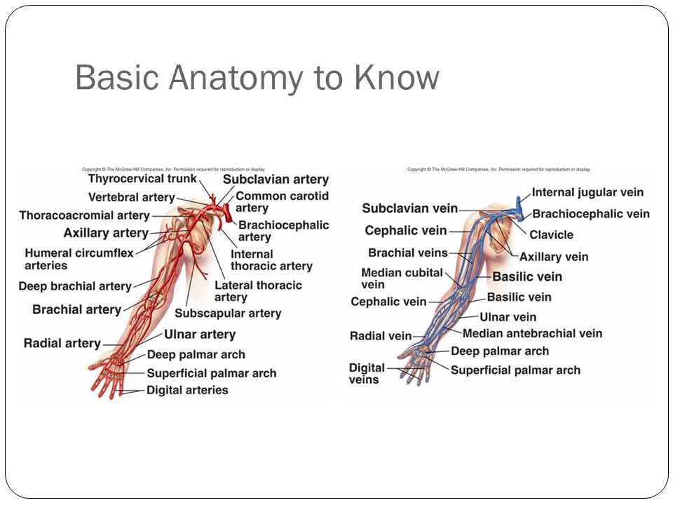 Basic Anatomy to Know