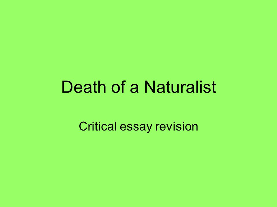 Critical essay ppt