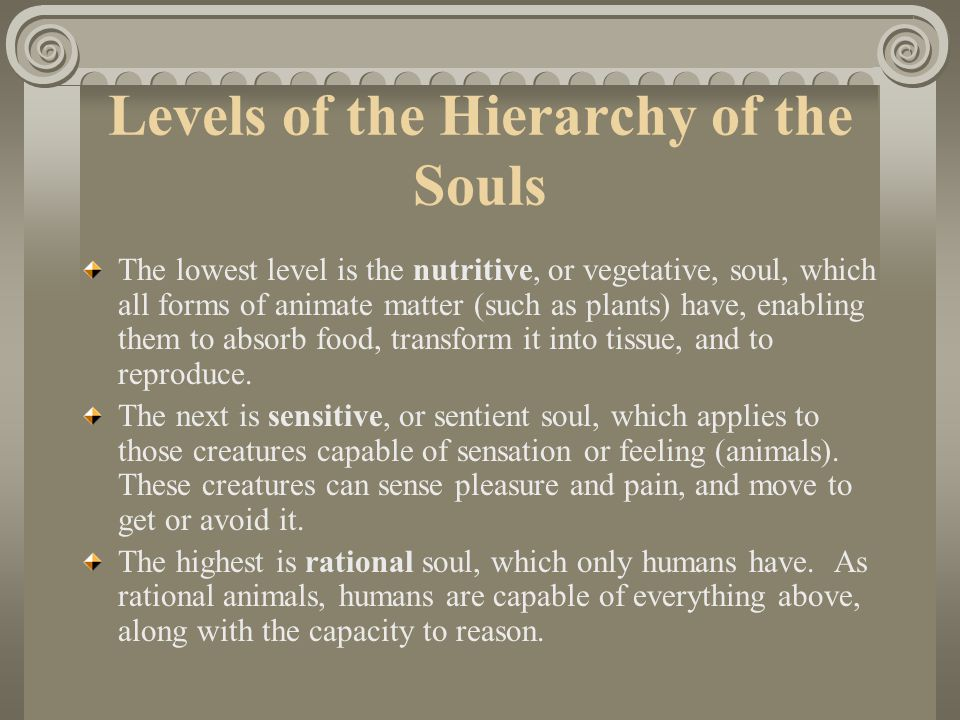 Levels of the Hierarchy of the Souls