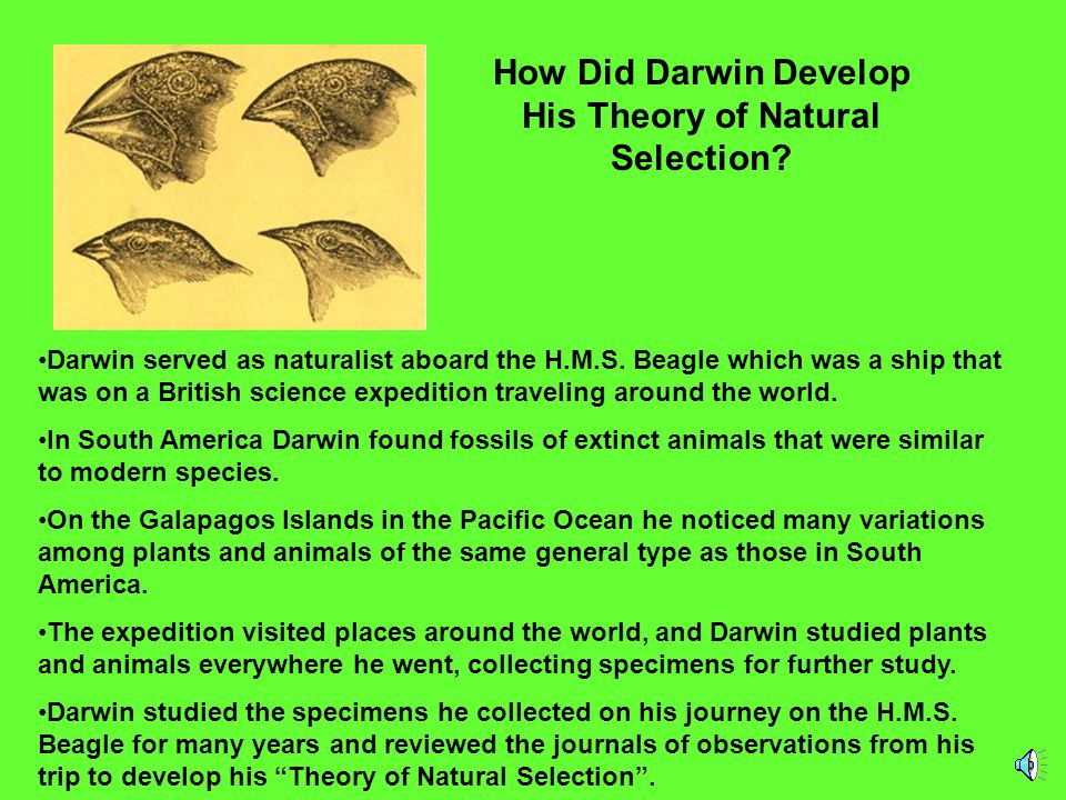 How Did Darwin Develop His Theory of Natural Selection
