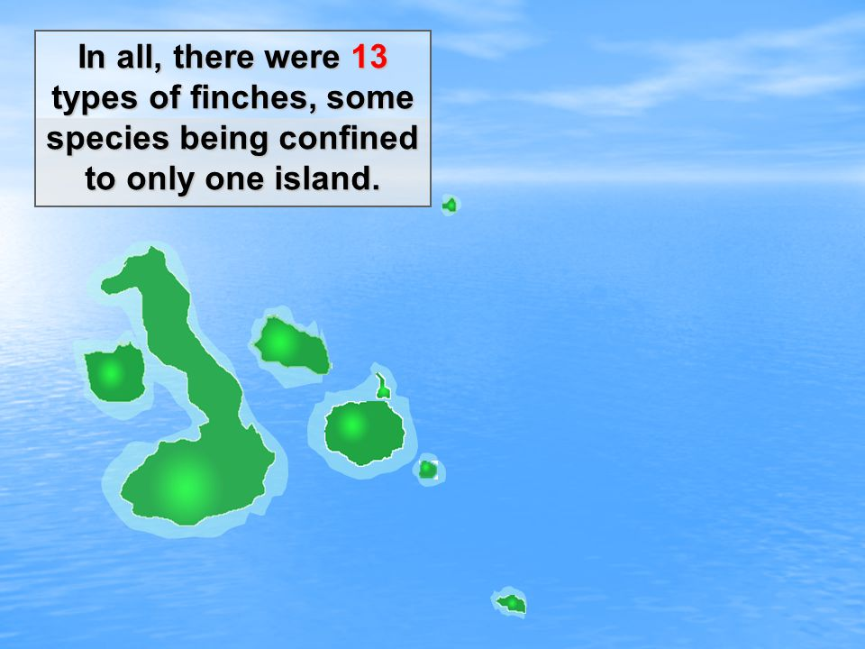 In all, there were 13 types of finches, some species being confined to only one island.