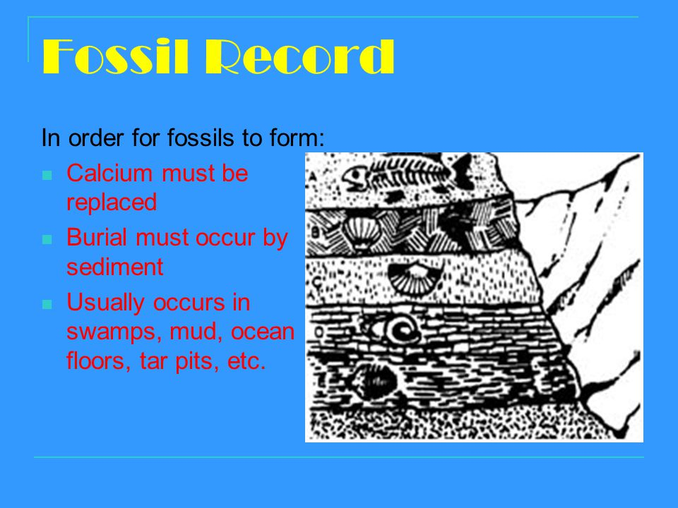 Fossil Record In order for fossils to form: Calcium must be replaced