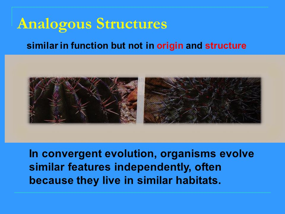 Analogous Structures similar in function but not in origin and structure.