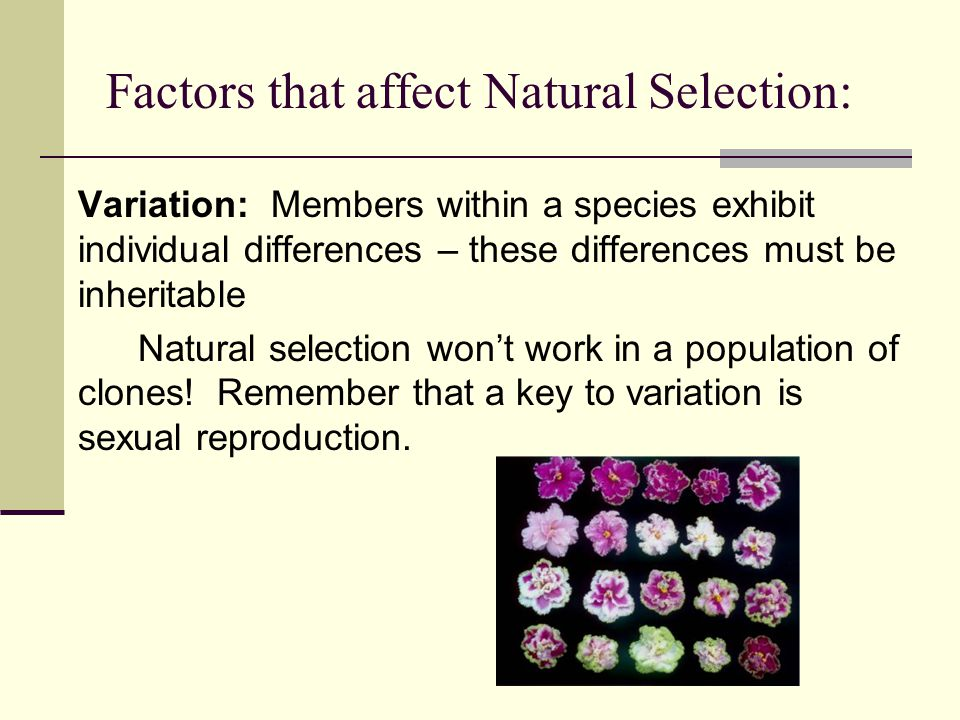 Factors that affect Natural Selection: