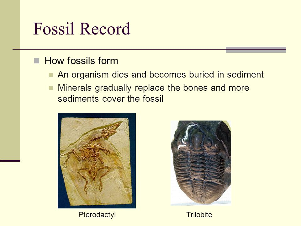 Fossil Record How fossils form