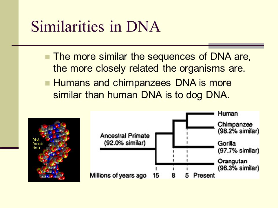 Similarities in DNA The more similar the sequences of DNA are, the more closely related the organisms are.