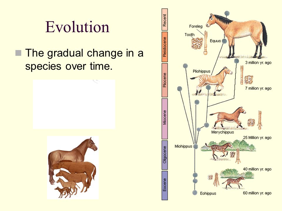 Evolution The gradual change in a species over time.