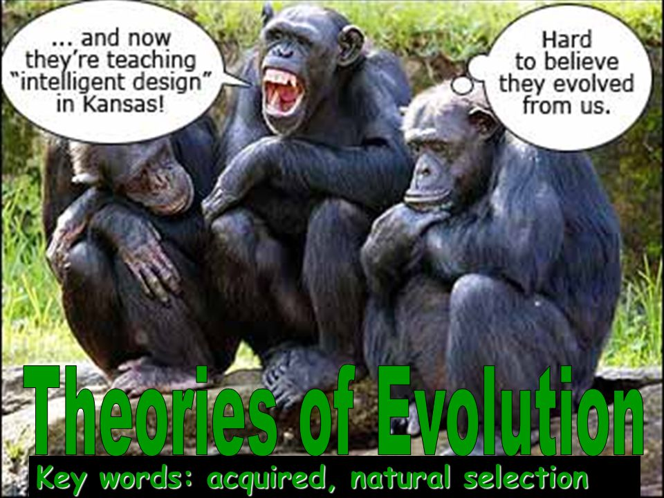 Theories of Evolution Key words: acquired, natural selection
