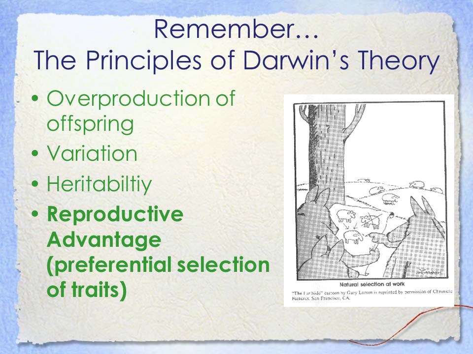 Remember… The Principles of Darwin's Theory