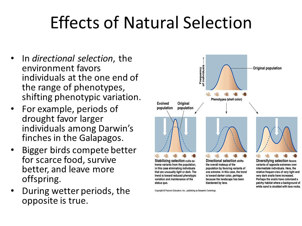 Effects of Natural Selection