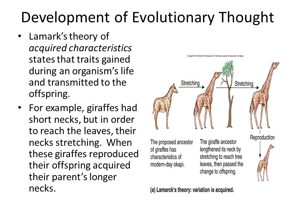 Development of Evolutionary Thought