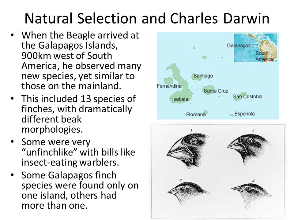 Natural Selection and Charles Darwin