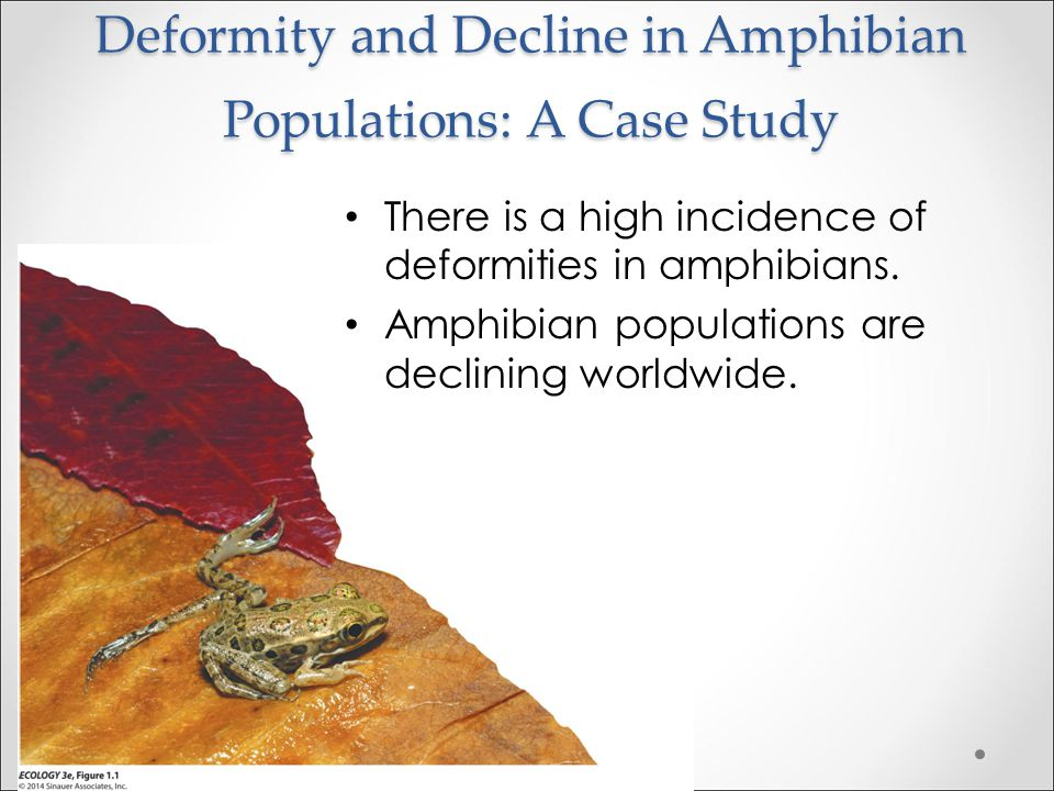 Deformity and Decline in Amphibian Populations: A Case Study