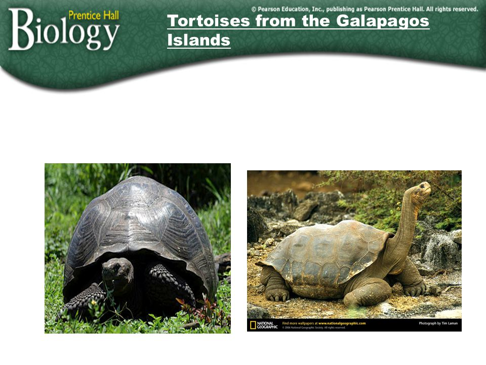 Tortoises from the Galapagos Islands