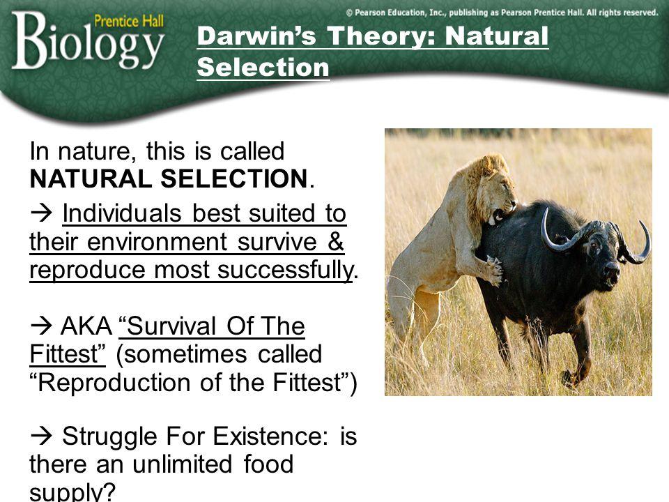 Darwin's Theory: Natural Selection