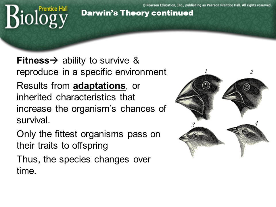 Darwin's Theory continued