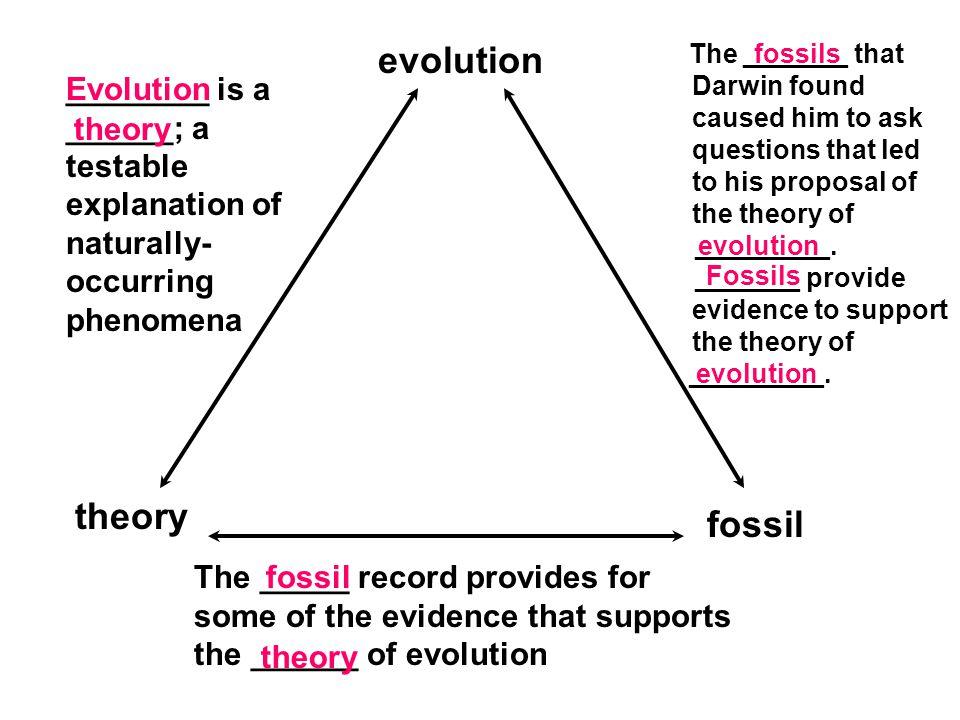 evolution theory fossil ________ is a