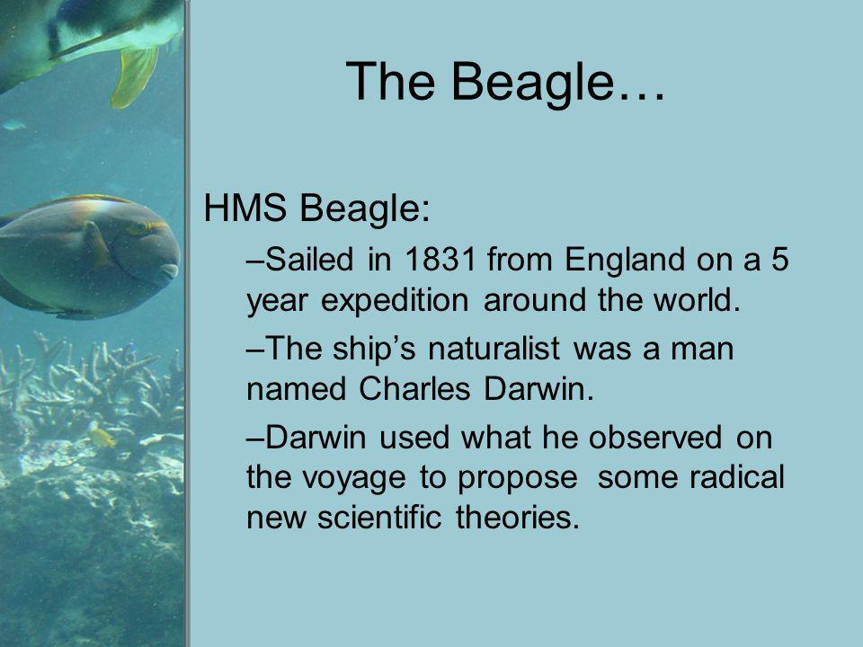 The Beagle… HMS Beagle: