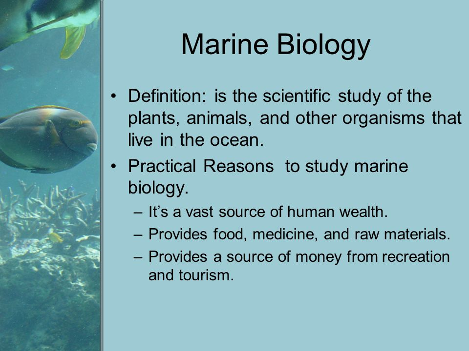 Marine Biology Definition: is the scientific study of the plants, animals, and other organisms that live in the ocean.