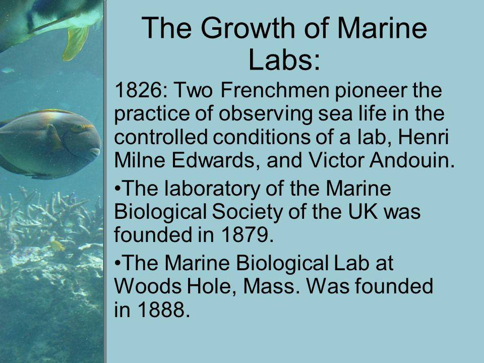 The Growth of Marine Labs: