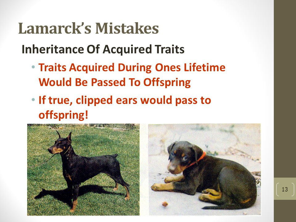 Lamarck's Mistakes Inheritance Of Acquired Traits