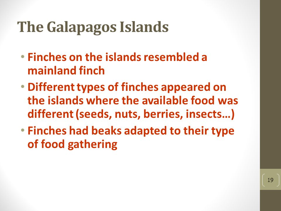 The Galapagos Islands Finches on the islands resembled a mainland finch.